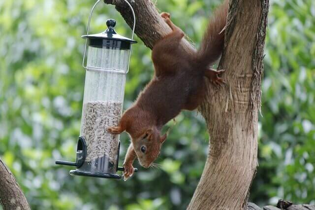 squirrel trying to pry open a bird feeder